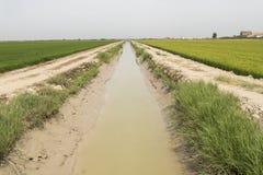 Irrigated rice plantation Royalty Free Stock Image