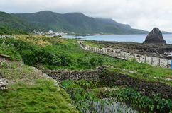 Irrigated taro Colocasia esculenta fields in Lanyu - Orchid island, Taiwan. The Tao are the native people in Lanyu / Orchid island. Living in a small island Stock Photo