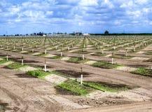 irrigatie Royalty-vrije Stock Foto's