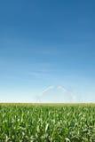 Irrigatie van graan Royalty-vrije Stock Afbeeldingen