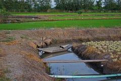 Irrigatieboot voor het plantaardige water geven, Thailand Stock Afbeelding