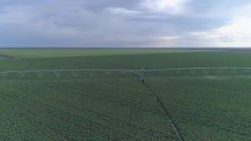 Irrigatiemateriaal het water geven raapzaadgebied, hommelmening op landbouwgrond stock videobeelden