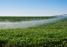 Irrigatiespil Stock Afbeelding