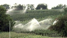 Irrigatiesysteem stock videobeelden