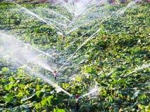 Irrigatiesysteem stock afbeeldingen