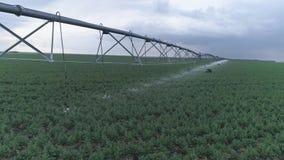 Irrigatiesysteem in landbouw, de groene gebieden van het raapzaadgewas op achtergrond van hemel stock videobeelden