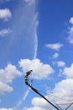 Irrigatiesysteem voor landbouw Stock Fotografie