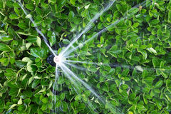 Irrigating an agricultural crop Stock Photo