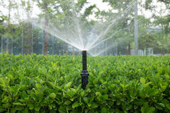 Irrigating an agricultural crop Stock Image