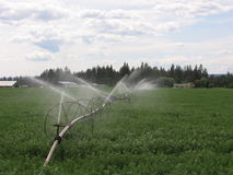 Irrigating Alfalfa Royalty Free Stock Image
