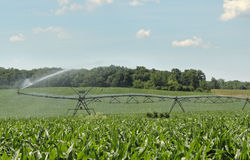 Irrigating a Corn Crop Royalty Free Stock Photos
