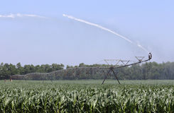Irrigating a Corn Crop Stock Photo
