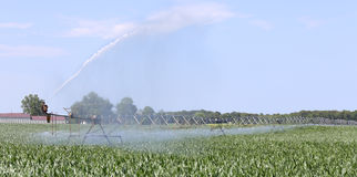 Irrigating a Corn Crop Stock Image