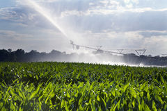 Irrigating a Cornfield Stock Photography