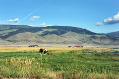 Irrigating Farm Land stock images