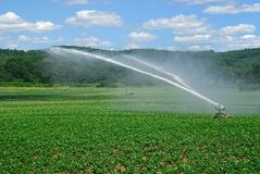 Irrigating field Stock Image