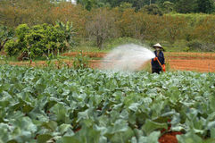 Irrigating the field. A man irrigating his crops in Vietnam Stock Images