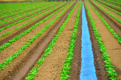Irrigating Field of Crops Royalty Free Stock Images