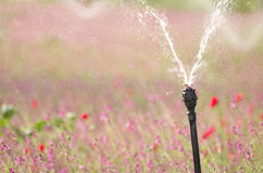 Irrigating a flower field Royalty Free Stock Photos