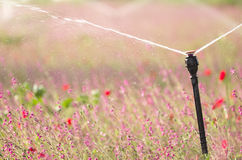 Irrigating a flower field Royalty Free Stock Photography