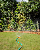 Irrigating a garden border with a Hosepipe. Hosepipe with spray attachment watering an English Back Garden Royalty Free Stock Photography