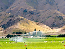 Irrigating lush farm pastures in central Otago, NZ Stock Images