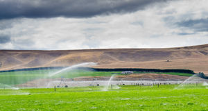Irrigating lush farm pastures in central Otago NZ. Turning a dry mountain valley into lush green farm pastures by irrigation with a long mobile sprinkler system Stock Photo
