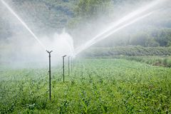 Irrigating Plants in Field Royalty Free Stock Photography