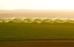 Irrigating potato field Stock Photos