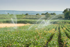 Irrigating of soy beans Stock Photography