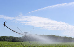 Irrigating Soybean Plants Royalty Free Stock Image