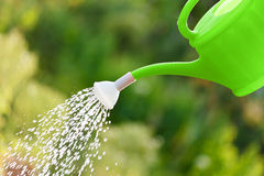 Irrigating with sprinkling can Royalty Free Stock Image