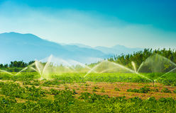 Free Irrigation Royalty Free Stock Photography - 10709537