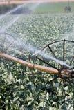 Irrigation Stock Image