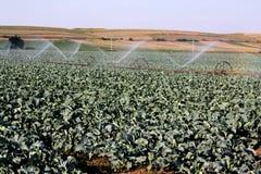 Irrigation image libre de droits