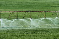 Irrigation. Cereal field in irrigated field royalty free stock photography