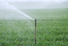 Irrigation. Green field being watered by automatic sprinkler system Stock Image