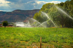 Irrigation. Sprinklers irrigate a field in the desert Stock Image