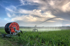 Irrigation Royalty Free Stock Photo