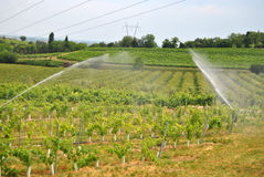 Irrigation. Royalty Free Stock Photography