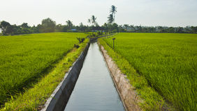 Irrigation. Rice field irrigation canal in paddy fields in Bali, Indonesia Royalty Free Stock Image