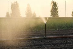 Irrigation Stock Photos