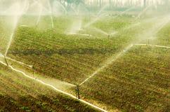 Irrigation Photo stock