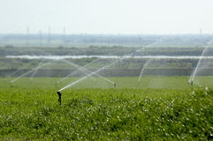 Irrigation. Water spray irrigation at a cultivated field at Barroca, Alcochete, southern Portugal,E.U Stock Photo