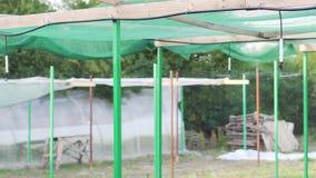 Irrigation agricole des usines utilisées pour la croissance de jeune plante banque de vidéos