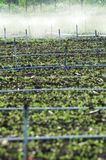 Irrigation of agricultural field Stock Image