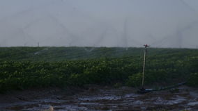 Irrigation of agricultural field stock video