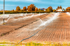 Irrigation of agricultural field with sprinklers Stock Photo