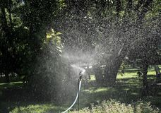Irrigation of agricultural field, water sprinkler Royalty Free Stock Photo