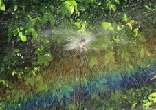Irrigation of agricultural field, water sprinkler Royalty Free Stock Images